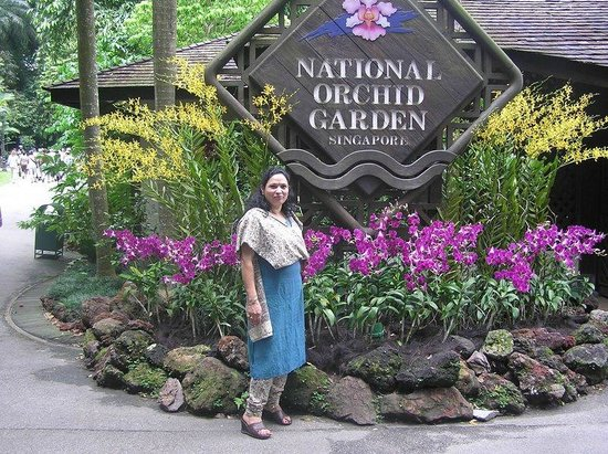 Swissotel The Stamford Singapore: The orchid garden