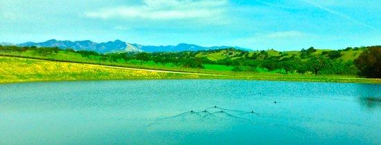 Martian Ranch and Vineyard: The pond at Martian Ranch