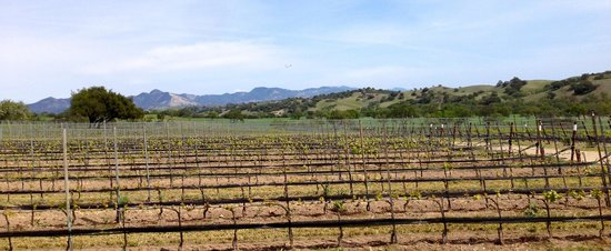 Martian Ranch and Vineyard