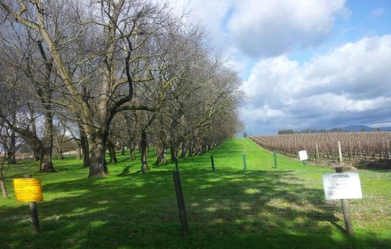 Vinetrekker Wine and Food Tours : it is beautiful !