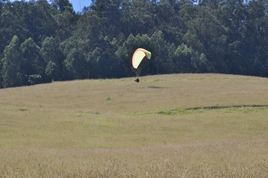 Proflyght Paragliding: Me paragliding with Dexter