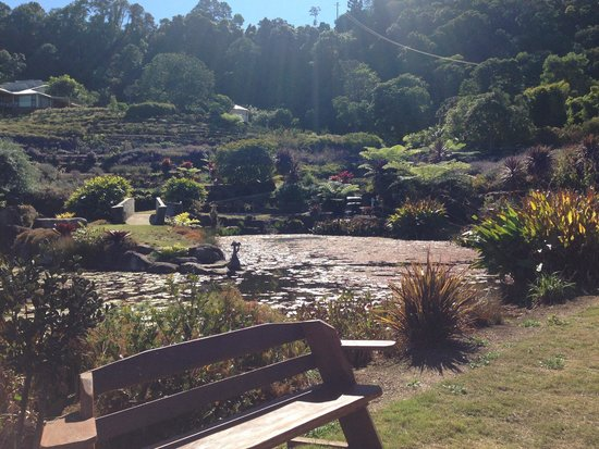 Maleny Botanic Gardens & Bird World : View looking up the gardens