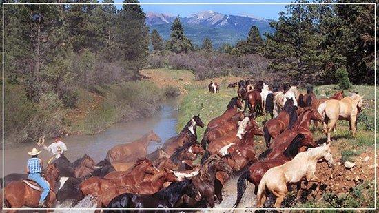 Majestic Dude Ranch : Horses