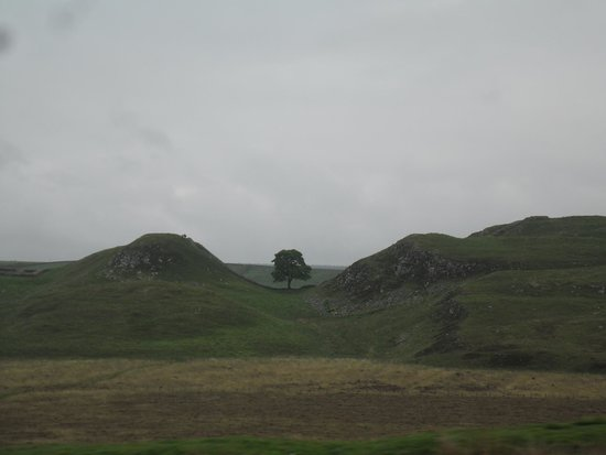 "Hadrian's Wall: THE ""ROBIN HOOD TREE"""