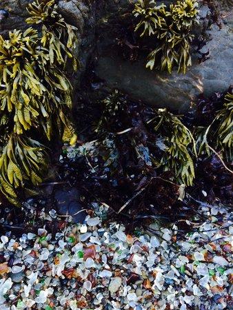 Glass Beach: Sea Glass and seaweed