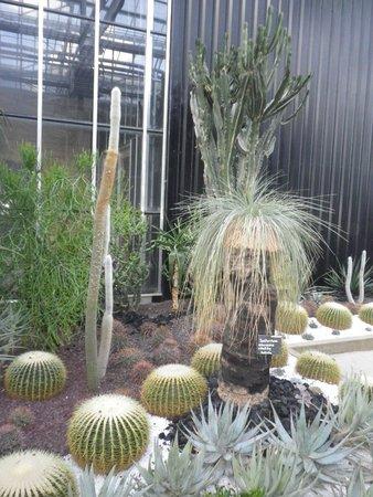 Terra Botanica: serre chaude