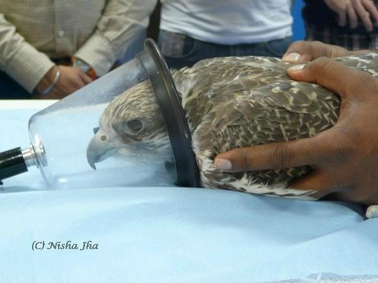 Abu Dhabi Falcon Hospital: Getting Anesthesia
