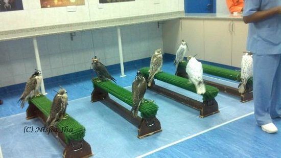 Abu Dhabi Falcon Hospital: Patients waiting in OPD
