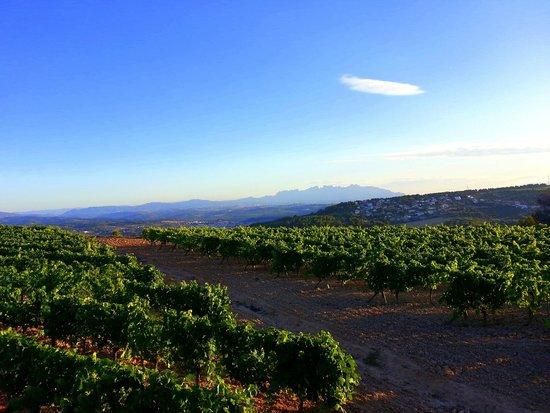 Crestabocs B&B: vineyards up hill La Guardai at San Pau d'Ordals