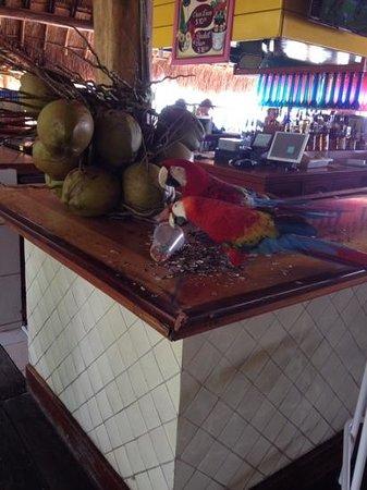the friendly staff at paradise beach bar