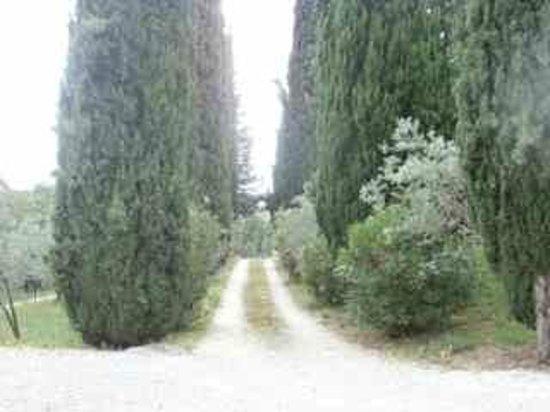 Agriturismo Marfuga : Il viale di ingresso con i cipressi