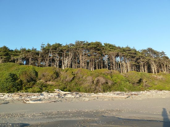 Kalaloch Lodge in Olympic National Park: Looking up into the mainland from Kalaloch Beach
