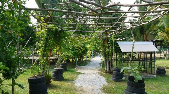 PD Ostrich Show Farm: Main walkway under the canopy of vines and trees