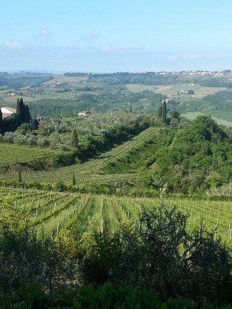 Villa I Barronci: Vignes