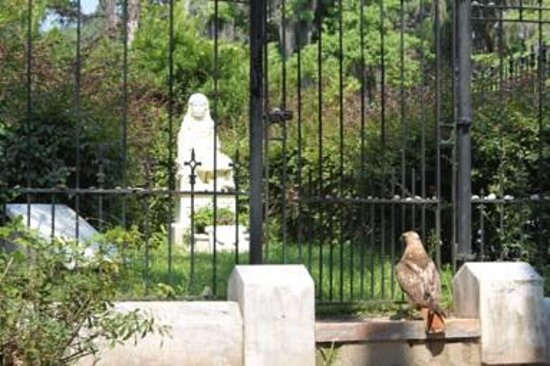 Bonaventure Cemetery Journeys w/ Shannon Scott: Miss Gracie has a visitor.