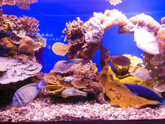 Underwater Observatory Marine Park : аквариумы