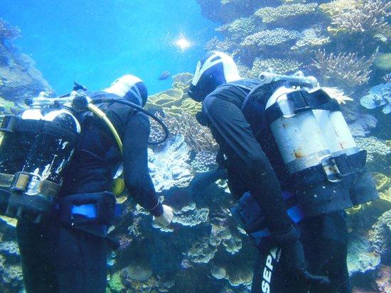 Underwater Observatory Marine Park : под водой