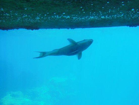 Underwater Observatory Marine Park : акула