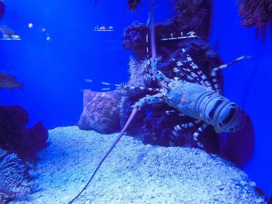 Underwater Observatory Marine Park: тоже