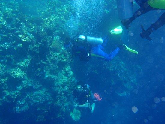 Bali Diving Academy Pemuteran: Menjangan /Tauchen