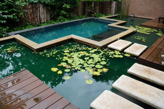 Orange County, Coorg: Our Private Pool in Cottage
