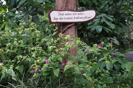 Orange County, Coorg: Nice Quotes in the resort