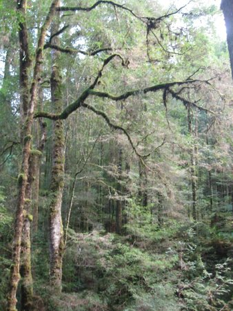 Tarkine Trails - Tarkine Rainforest Retreat: On the way to Huskisson River
