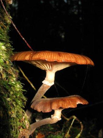 Tarkine Trails - Tarkine Rainforest Retreat: Fungi
