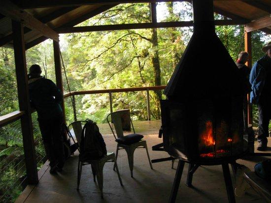 fallen gum bild fr n tarkine trails tarkine rainforest. Black Bedroom Furniture Sets. Home Design Ideas