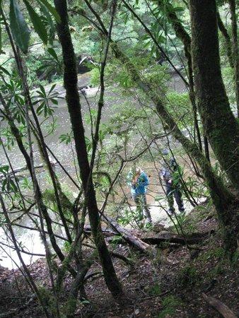 Tarkine Trails - Tarkine Rainforest Retreat: Huskisson River