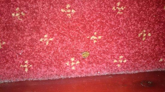 Hotel Olympia: Dead Beetle