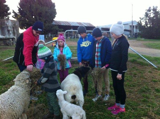 Barcoos Farmstays Bathurst : feeding the sheep