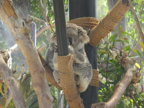 San Diego Zoo : Just hanging out
