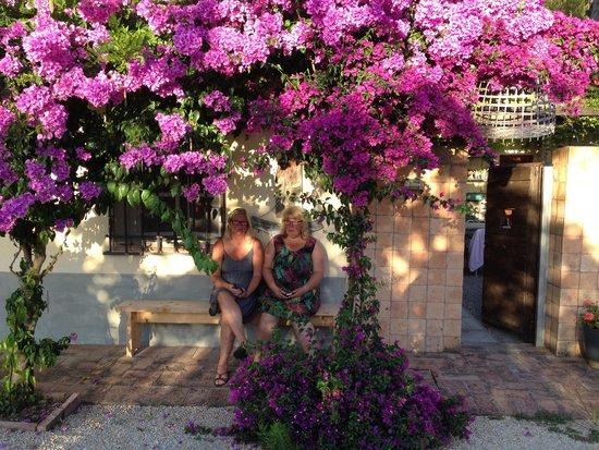 Le Stanze del Casale B&B : Lite skugga under bouganvillan