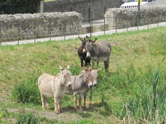 Camping la Couteliere : Donkeys