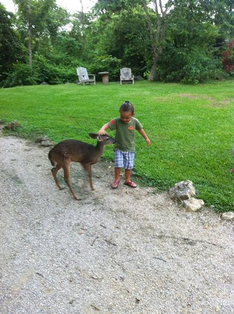 The Farm Inn : Playing with the deer on arrival