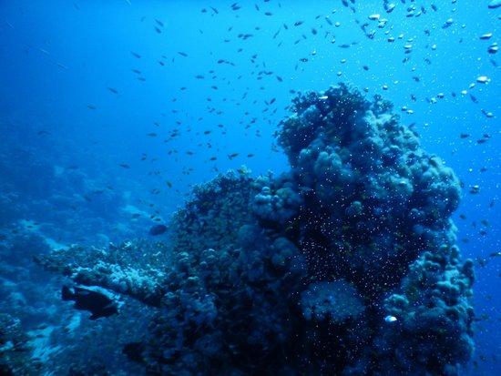 Coraya Divers: Hier doe je 't voor