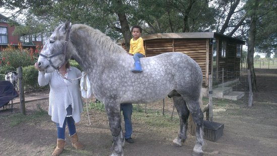 Outeniqua Moon Percheron Stud and Guest Farm: Cara sitting on Shadowfax