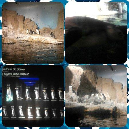 Acquario di Genova: i pinguini