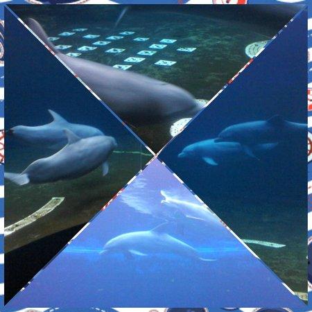 Acquario di Genova: i delfini