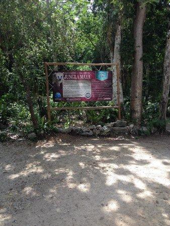 Mayan Jungle Tour: Jungla maya !