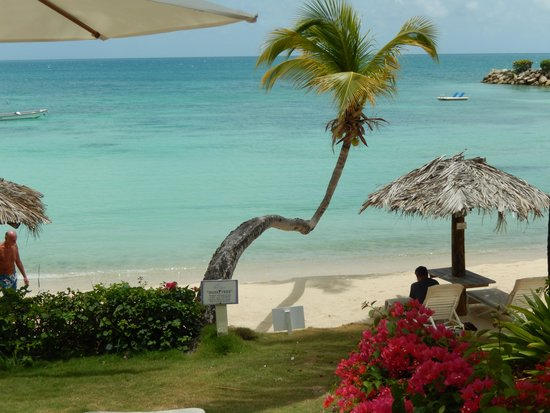 Blue Waters Antigua: Hugo tree & beach