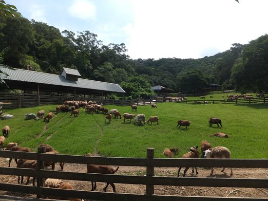 Flying Cow Ranch Hotel Miaoli: Where the animals roam
