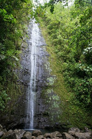 Manoa Falls: Waterfall at Monoa hike