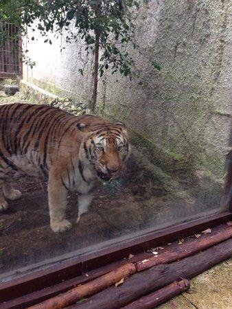 Bel Air Collection Xpu Ha Riviera Maya: La tigre!