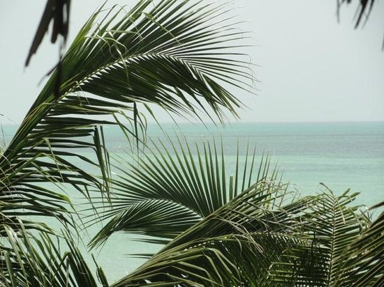 Beachfront La Palapa Hotel Adult Oriented: una vista muy linda, entre las palmeras puede divisarse el mar.