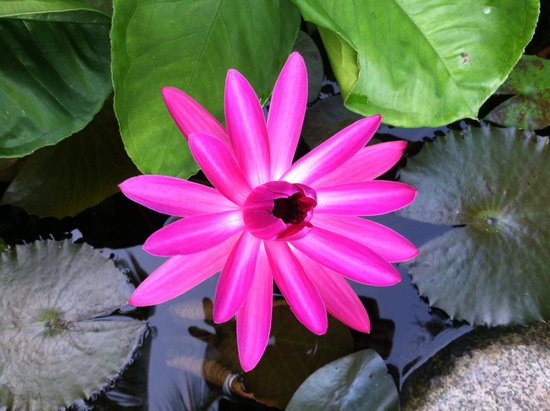 Casa Cuitlateca: Lillypad flower in pond surrounding pool