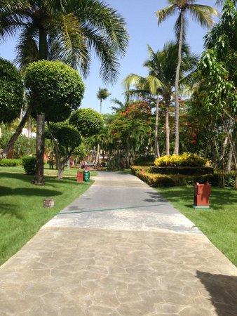 Iberostar Punta Cana: very scenic grounds
