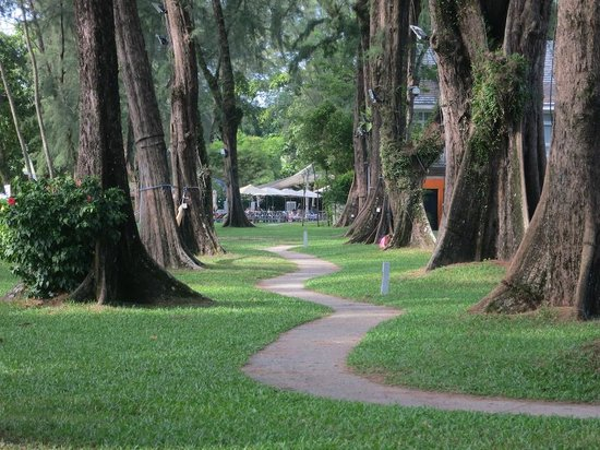Lone Pine Hotel: Part of the extensive gardens; some of these trees have hammocks between them