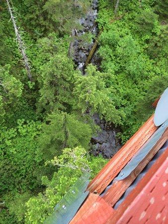Alaska Zipline Adventures: Looking down from the highest platform
